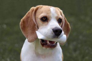 Szczotka, pasta... Recenzja produktów do czyszczenia psich zębów od AlleZoo